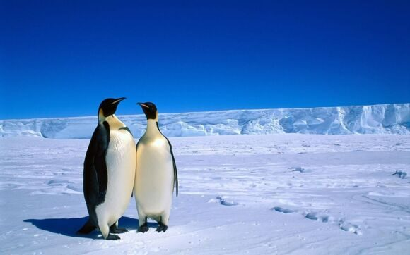 6769037-adorable-antarctica-wallpaper